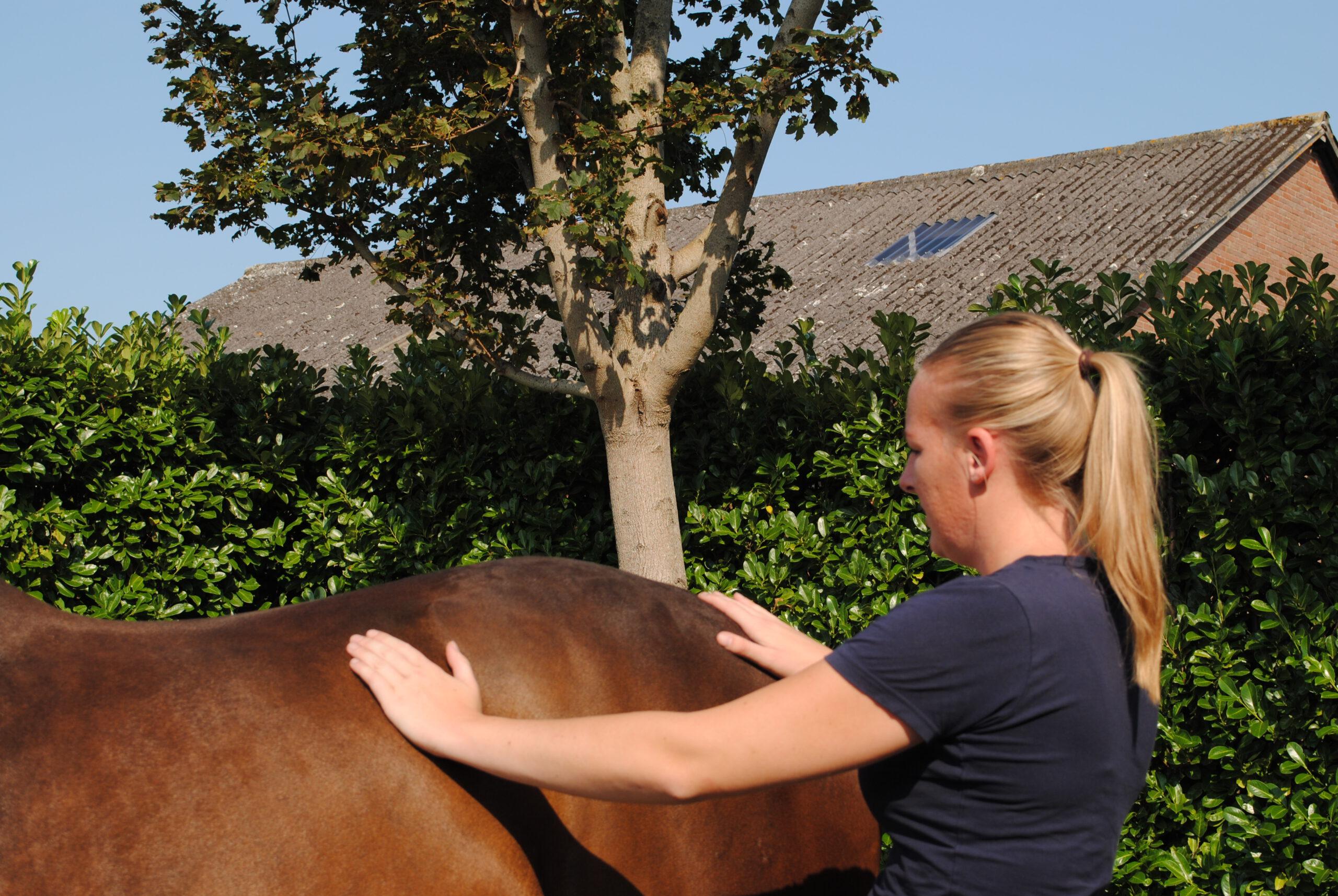 Deel 2 - Je paard ondersteunen met massage technieken!
